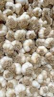 close up bunches of garlic ready for sale photo