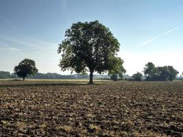 Árbol en un campo arado cerca de York, Inglaterra foto