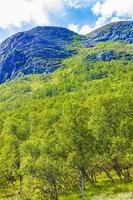 Panorama del paisaje de montaña y bosque en un día soleado de Noruega. foto