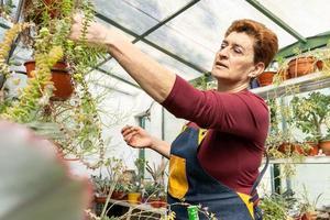Woman examining her green plants photo