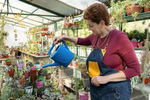 Older woman in gardening apron posing with a blue watering can in her greenhouse.She is surrounded by succulent plants. photo