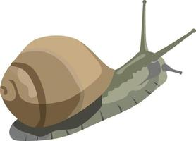 Snail Slow Animal Vector