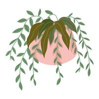 hanging plant in pot vector