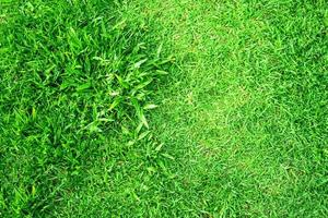 Green grass texture for background. Green lawn pattern and texture background. photo