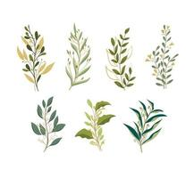 leaves with golden line vector