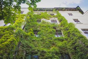 Apartment building covered with green Ivy plant photo