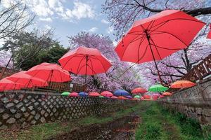 Spring cherry blossom festival jinhae gunhangje 2019 en la estación de tren de gyeonghwa de corea del sur. foto
