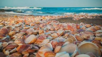Sea shells on the beach photo
