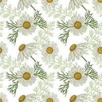 Medical Chamomile Flowers, hand drawn seamless pattern in a retro style vector