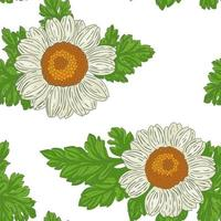 Medical Feverfew Flowers, hand drawn seamless pattern a retro style vector