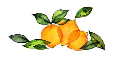 Ramo de frutas de limón fresco por acuarela. linda decoración para textiles para el hogar y la cafetería, para la decoración del empaque y el menú vector
