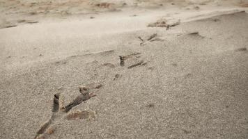 huellas de aves en la playa de arena foto