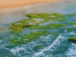 Algas verdes sobre las piedras en el mar mediterráneo foto