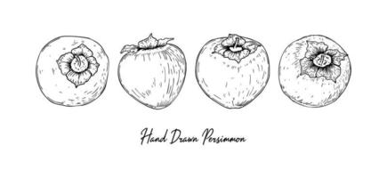 Set of hand drawn persimmon isolated on white background. Vector illustration in sketch style