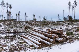 Deforestation area in a winter cold Sweden photo