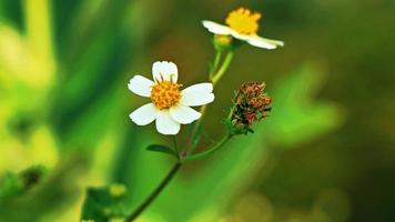 pequeñas flores blancas sobre un fondo verde foto