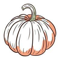 imagen de calabaza madura. Ilustración de comida de otoño. bosquejo de calabaza fresca. elemento para el diseño decorativo de otoño, invitación de halloween, cosecha, pegatina, impresión, logotipo, menú, receta vector