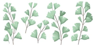 Ginkgo biloba known as the ginko or gingko leaves vector