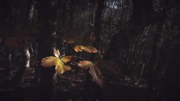 windbries op plant met herfstbladeren video
