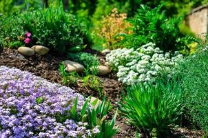 Flowerbed with stones, white and purple flowers and a lot of green plants photo