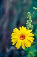 flores de caléndula amarilla en flor, flores de caléndula en el jardín foto