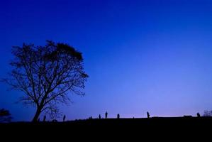 Silhouette of young photographer taking picture near tree of landscape during the sunset photo