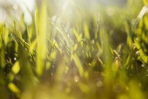 natural grass close up photo