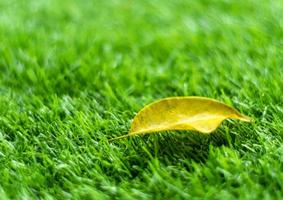 Yellow fall leaf on the artificial grass by shallow depth of field photo