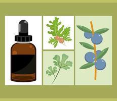 essential oil set vector