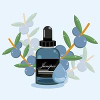 juniper essential oil vector