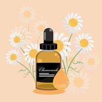 chamomile essential oil vector