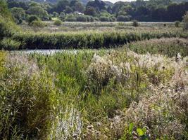 Wetland habitat at Staveley Nature Reserve, North Yorkshire, England photo