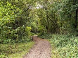 Sendero hacia un bosque en Staveley, North Yorkshire, Inglaterra foto
