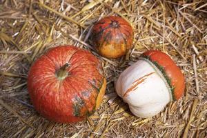 Tres calabazas naranjas decorativas sobre un fondo de paja. foto