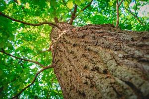Tree from below with a shallow depth of field photo