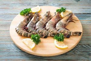 fresh tiger prawn or shrimp photo