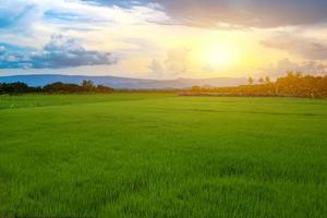 Green rice seedlings in a paddy field with beautiful sky and cloud, The sun setting over a mountain range in the background photo