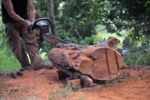 Man woodcutter saws tree stump with the old chainsaw photo
