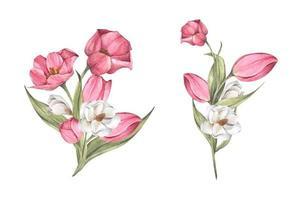 Bouquet of tulips and magnolia. Floral composition. Watercolor illustration. vector