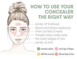 How to apply your concealer the right way infographic chart. vector