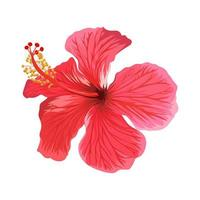 Beautiful hibiscus flower isolated on white background. vector