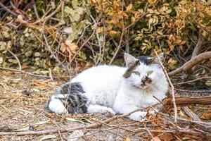 Stray cat chills relaxes sleeps in the nature Rhodes Greece. photo