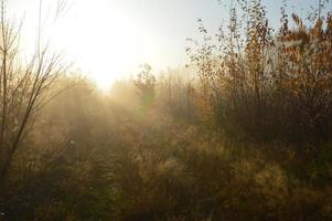The morning sun rises on the horizon in the forest and village photo