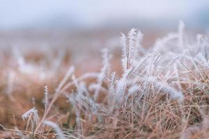 naturaleza del prado de hierba cubierta de gotas heladas de rocío matinal. clima de invierno brumoso, paisaje blanco borroso. Tranquilo día frío de invierno, plantas naturales heladas heladas de cerca foto