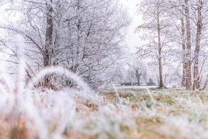 algunas hermosas plantas de pradera congeladas cubiertas de carámbanos. Fondo de naturaleza de primer plano de invierno. espacio libre para texto. enfoque selectivo. poca profundidad de campo, tonos azules fríos y suaves foto