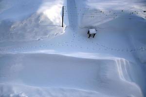 vista superior del huerto en invierno. huellas de gato en la nieve. foto