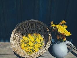 yellow big dandelion flowers in vase, wicker photo
