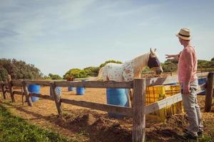Hombre acariciando caballo blanco con un saco de arpillera que cubre sus ojos comer heno en el rancho foto