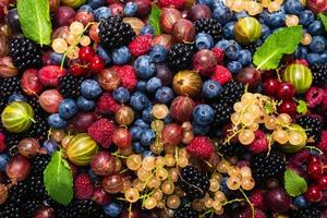 Gooseberries, blueberries, mulberry, raspberries, white and red currants. photo