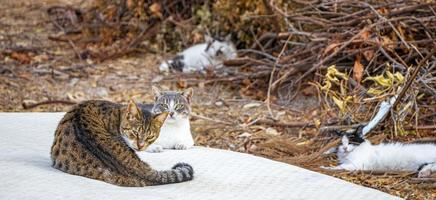 Stray cats chill on garbage mattress on Rhodes Greece. photo